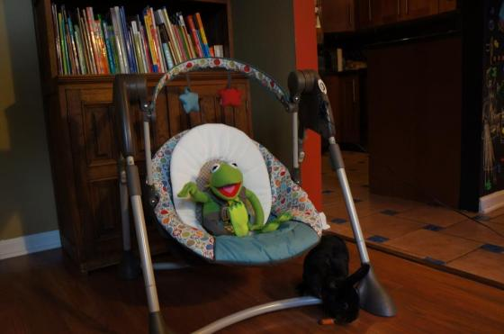 Kermit the Frog was eager to test the swing before Ruby was born. Geri, our bunny was relatively uninterested.